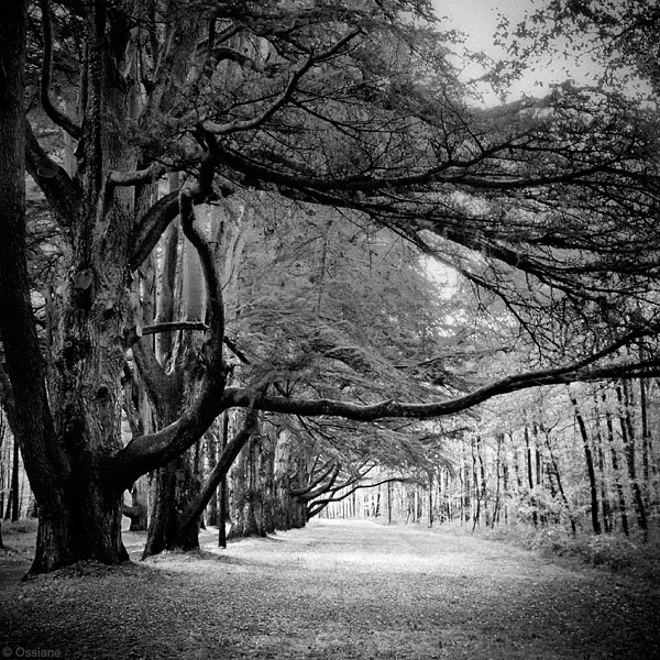 Arbor Essence: photo THE FIRST TIME (Author: Ossiane)