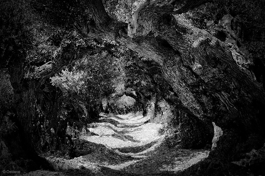 Sacred Woods: photo LABYRINTH (Author: Ossiane)