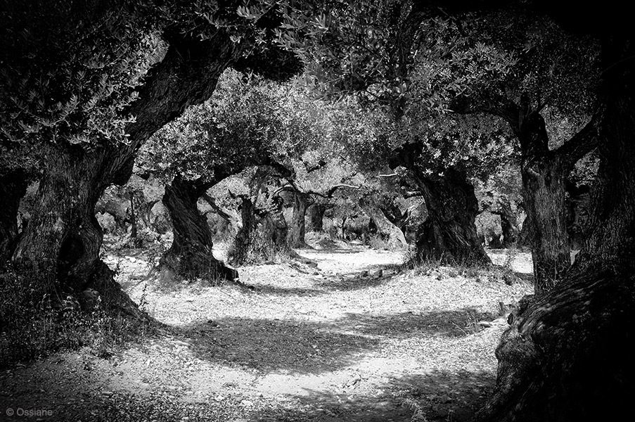Sacred Woods: photo APPARITION (Author: Ossiane)