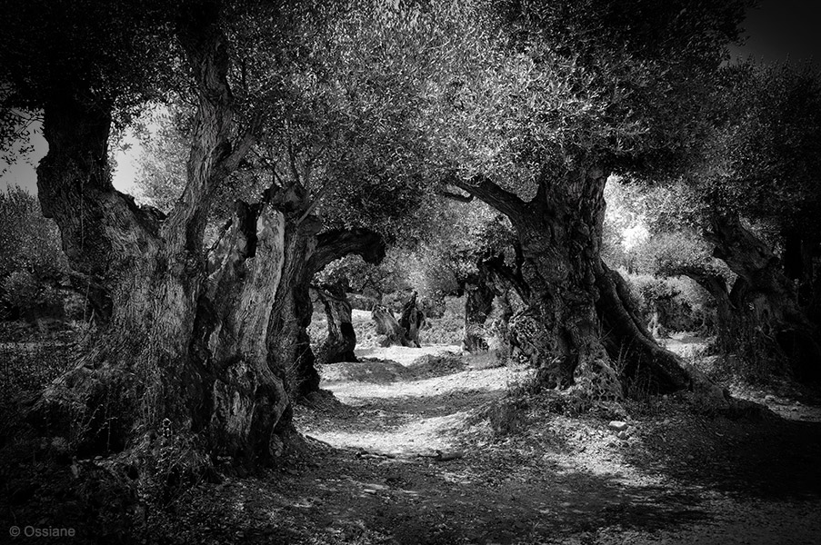 Sacred Woods: photo CANTILENA (Author: Ossiane)